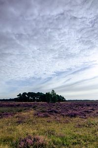 Strabrechtse Heide 122