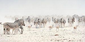 zebrakudde op de zoutpan van  Etosha van