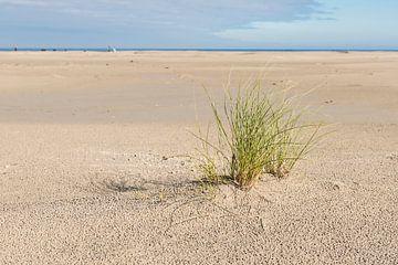 Strand met een plant helmgras van