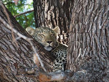 Schlafender Leopard von Marleen Berendse