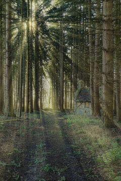 In het bos von Anya Lobers
