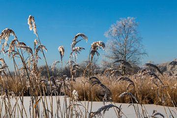 Winter in de Lage Landen van Peter Leenen