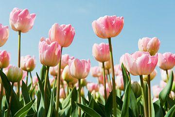 Roze tulpen in het bollenveld van Ivonne Wierink