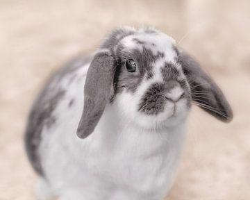 Kaninchen, Hochtaste von Naomi van Mierlo