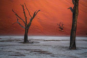 Ingesloten door machtige duinen.