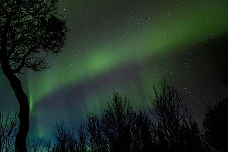 Norderlichter