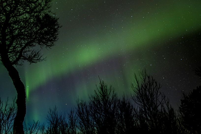 Noorderlicht van Ymala Antonsen