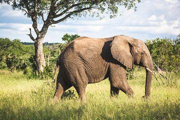Mannetjesolifant in typisch Afrikaans landschap van Simone Janssen