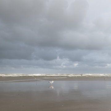 Strand met meeuwen van Johanna Blankenstein