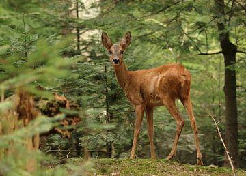 Ree in het bos van Emmaly Dobbenberg