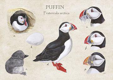 Puffin (papegaaiduiker) van Jasper de Ruiter