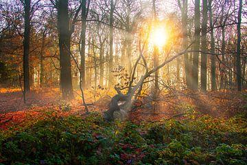 Sonnenaufgang in einem Herbstwald von MPhotographer