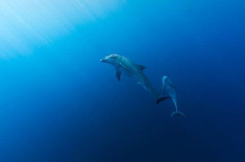Dolphin Delight von