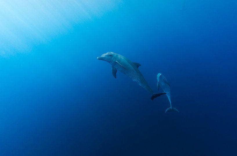 Dolphin Delight sur Joost van Uffelen