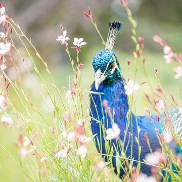 Pauw van Scholtes Fotografie