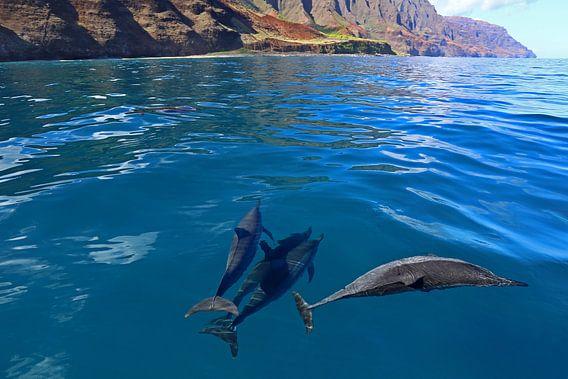 Dolfijnen voor de kust van Hawaii van Antwan Janssen
