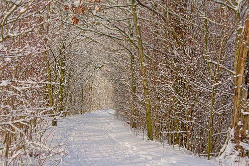 Besneeuwd pad door een tunel van bomen