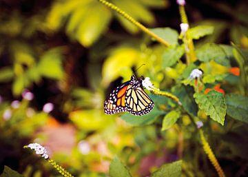 Butterfly van Jolien Somers