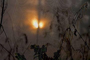 Spinnenweb in de herfst van Anja Uhlemeyer-Wrona