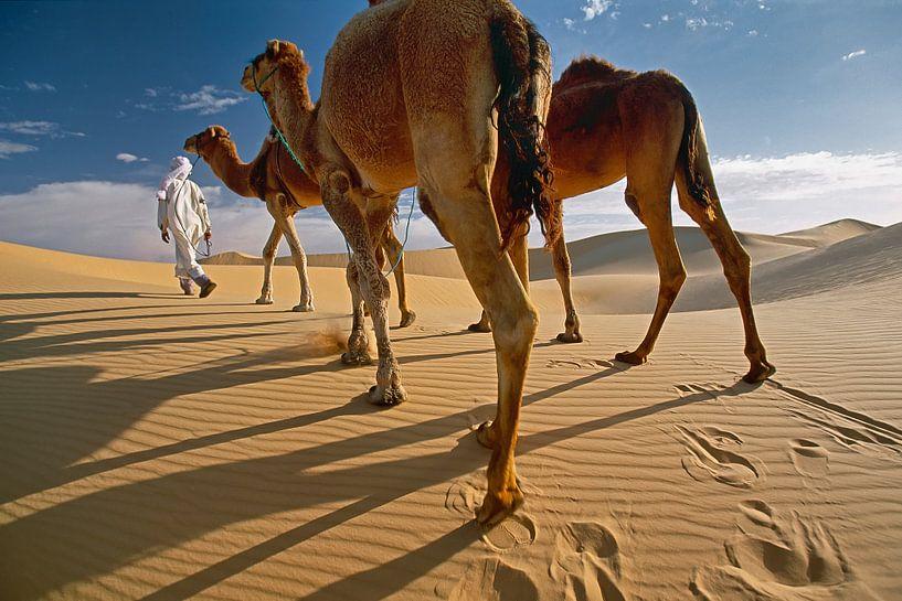 Le désert du Sahara. Bédouin avec des chameaux sur Frans Lemmens