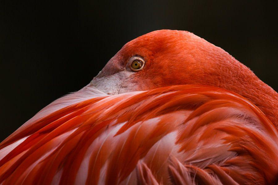 Flamingo van Bart van Dinten