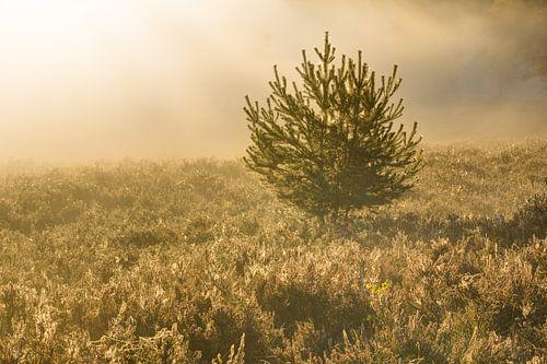 eenzame spar op de mistige heide van Francois Debets