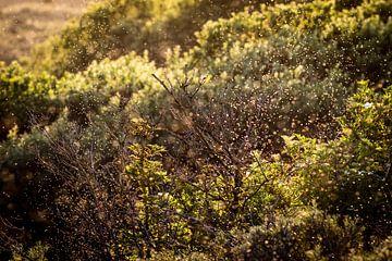 Dünen bei untergehender Sommersonne von Marcel Alsemgeest