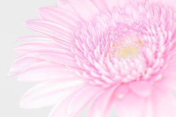 """""""High Key"""" Blume farbe 4 von Albert Mendelewski"""