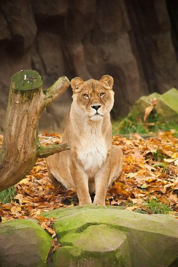 Zoo Antwerpen 5