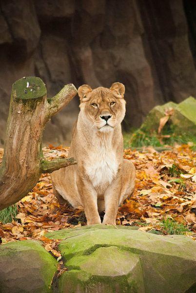 Zoo Antwerpen 5 van Cynthia Jansen