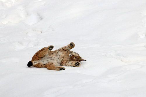 Lynx in de sneeuw