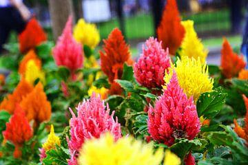 prachtige punt bloemen von Gerrit Neuteboom