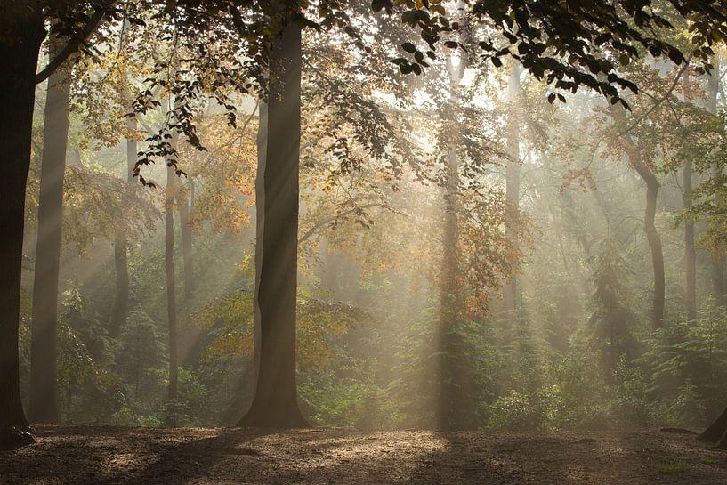 Magic Woodland (3) van Art Wittingen