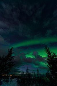 Les aurores boréales dans le ciel nocturne de l'île de Senja