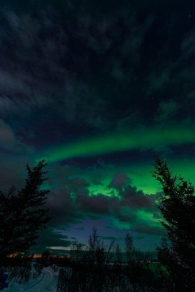 Les aurores boréales dans le ciel nocturne de l'île de Senja sur Sjoerd van der Wal