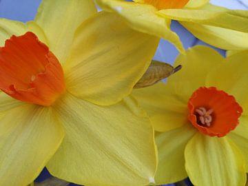 Narcis 2 von Karen Bos