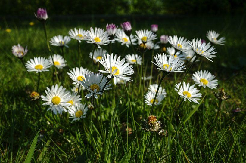 Daisies, daisies van Mike Bing