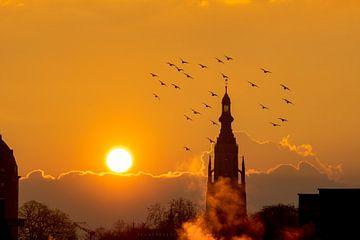 Die Vögel von TPJ Verhoeven Photography