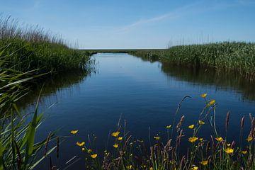 Graben zum Wattenmeer auf Terschelling von Mirjam Welleweerd