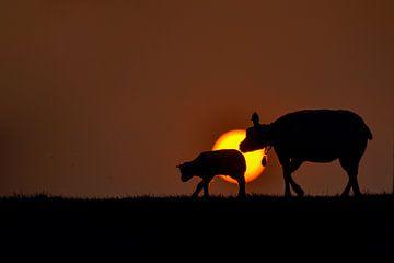 Sonnenuntergang-Silhouette von Kirsten Geerts