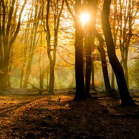 Zonlicht in het herfstbos  sur Fotografie Egmond
