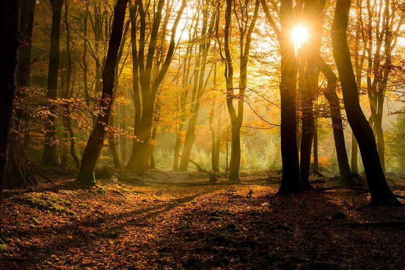 Zonlicht in het herfstbos  van Fotografie Egmond