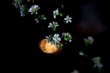 Fleur de printemps