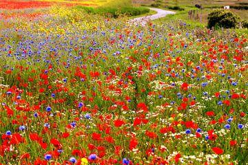 bloemenzee in het Zeeuwse landschap van Els Fonteine