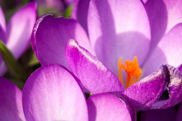 Een heel klein bloempje van Elmar Marijn Roeper