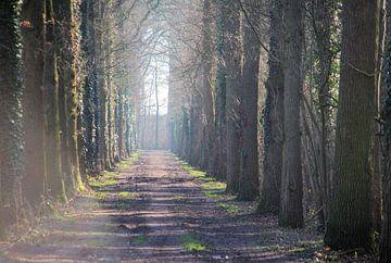Ein Waldweg zum Deich. von Jurjen Jan Snikkenburg