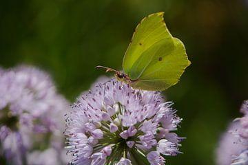 Vlinder op een paarse bloem van Lizet Wesselman