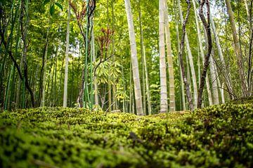 Bamboe bos in Kyoto, Japan
