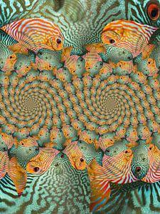 Double spirale de poissons tropicaux