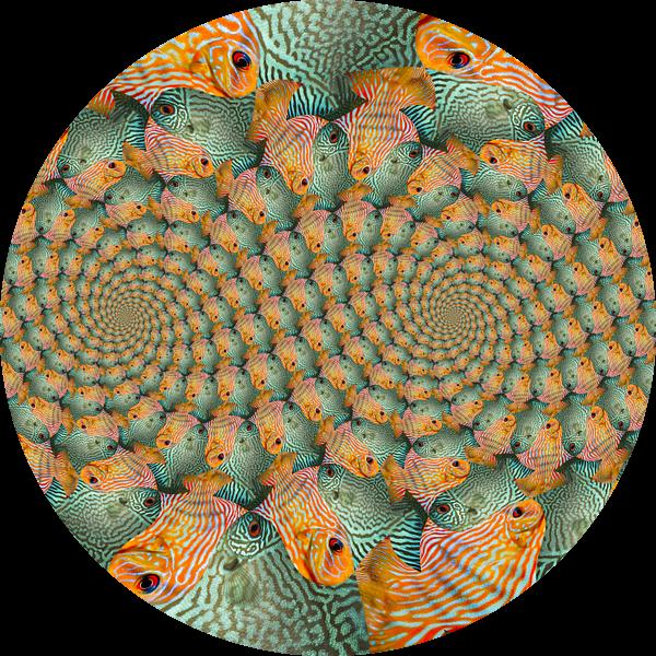 Dubbele Spiraal van Tropische Vissen van Tis Veugen